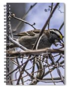 White-throated Sparrow With Berry Spiral Notebook