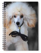 White Toy Poodle Spiral Notebook