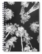 White Trees Spiral Notebook