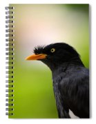 White Vented Myna Bird With Feathers Standing Above Beak Spiral Notebook