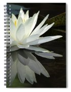 White Water Lily Reflections Spiral Notebook