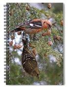 White-winged Crossbills Spiral Notebook