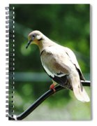 White Winged Dove Spiral Notebook