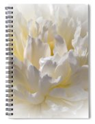 White Peony With A Dash Of Yellow Spiral Notebook