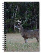 Whitetail Buck 1 Spiral Notebook
