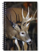 White-tailed Deer Antler Shadow Spiral Notebook
