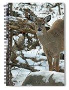 Whitetail Deer Doe In Snow Spiral Notebook