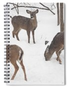 Whitetail Deer In Snowy Woods Spiral Notebook