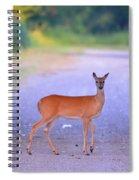 Whitetail Doe Spiral Notebook