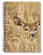 Whitetail In Weeds Spiral Notebook