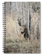 Whitetail Undercover Spiral Notebook