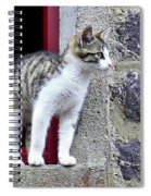 Who Goes There - Kitten Spiral Notebook