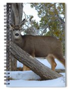 Who Me?  Oh Deer Spiral Notebook