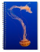 Who What Where When Purple Striped Jelly 1 Spiral Notebook