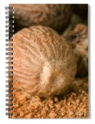 Whole Nutmeg Nuts Spiral Notebook
