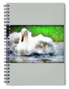 Whooper Swan Flutter Spiral Notebook