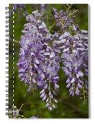 Wild Alabama Wisteria Frutescens Wildflowers Spiral Notebook