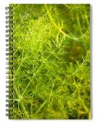 Wild Aniseed Spiral Notebook