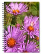 Wild Asters Spiral Notebook