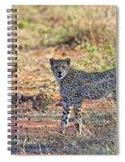 Wild Beauty... Spiral Notebook