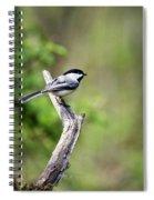 Wild Birds - Black Capped Chickadee Spiral Notebook
