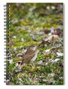 Wild Birds Hermit Thrush Spiral Notebook
