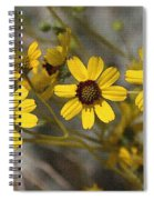 Wild Brittle Bush Flowers Spiral Notebook