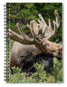 Wild Bull Moose Spiral Notebook