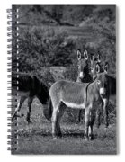Wild Burros In Black And White  Spiral Notebook