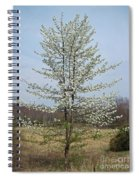 Wild Cherry Tree In Spring Bloom Spiral Notebook