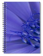 Wild Chicory Macro Spiral Notebook