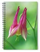 Wild Columbine Wildflower - Aquilegia Canadensis Spiral Notebook