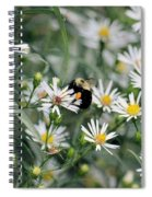 Wild Daisies And The Bumblebee Spiral Notebook