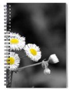 Wild Daisies Spiral Notebook