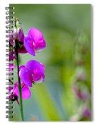 Wild Everlasting Pea Spiral Notebook