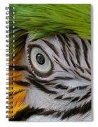 Wild Eyes - Parrot Spiral Notebook