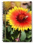 Wild Flowers Sierra Ancha Mountains Spiral Notebook