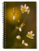 Wild Garlic Spiral Notebook