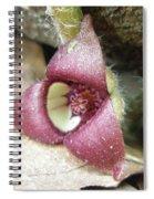 Wild Ginger Flower - Asarum Canadense Spiral Notebook