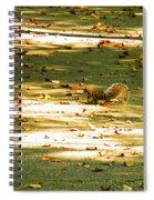 Wild Gray Squirrel Spiral Notebook