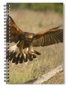 Wild Harris Hawk Landing Spiral Notebook