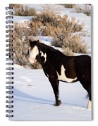 Wild Horse Stallion Spiral Notebook