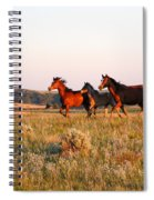 Wild Horses At Sunset Spiral Notebook