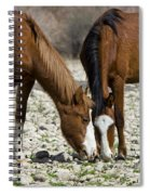 Wild Horses Grazing  Spiral Notebook