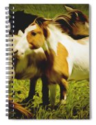 Wild Horses In California Series 14 Spiral Notebook