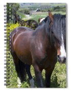 Wild Horses In California Series 4 Spiral Notebook