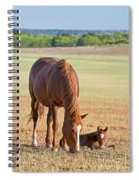 Wild Horses Mother And Baby Spiral Notebook