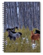 Wild Horses Of The Ghost Forest Spiral Notebook