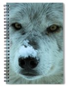Wild Intensity Spiral Notebook