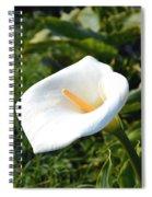 Wild Lily Spiral Notebook